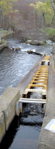 Fish Ladder at the Wapping Dam